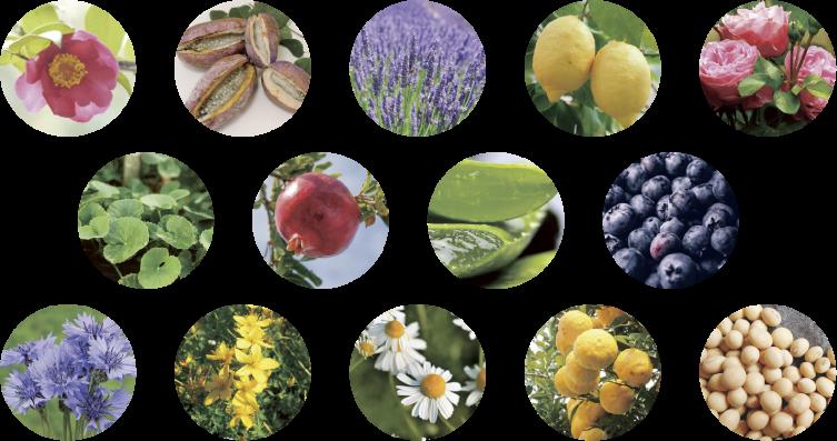 61種類のボタニカル成分