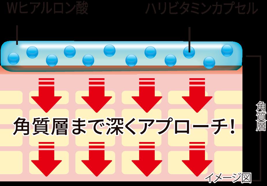 イメージ図:Wヒアルロン酸、ハリビタミンカプセル→角質層まで深くアプローチ!