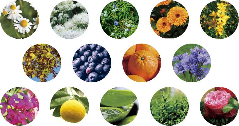40種類以上のボタニカル成分