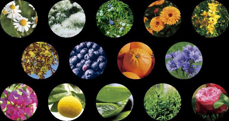 20種類以上のボタニカル成分